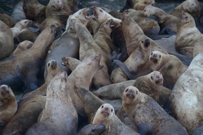 Seals01